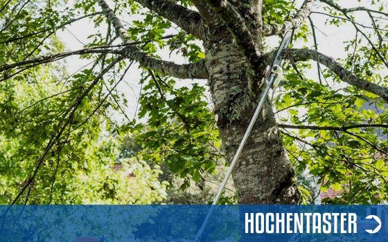 Hochentaster Sortiment | Motorgeräte-Halberstadt