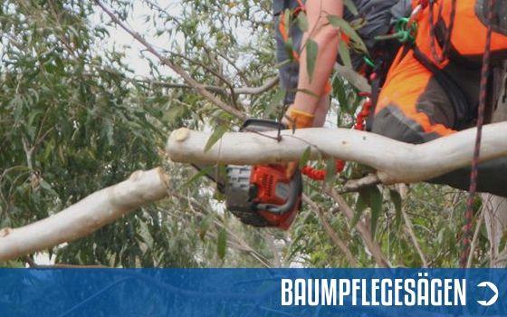 Baumpflegesägen Sortiment